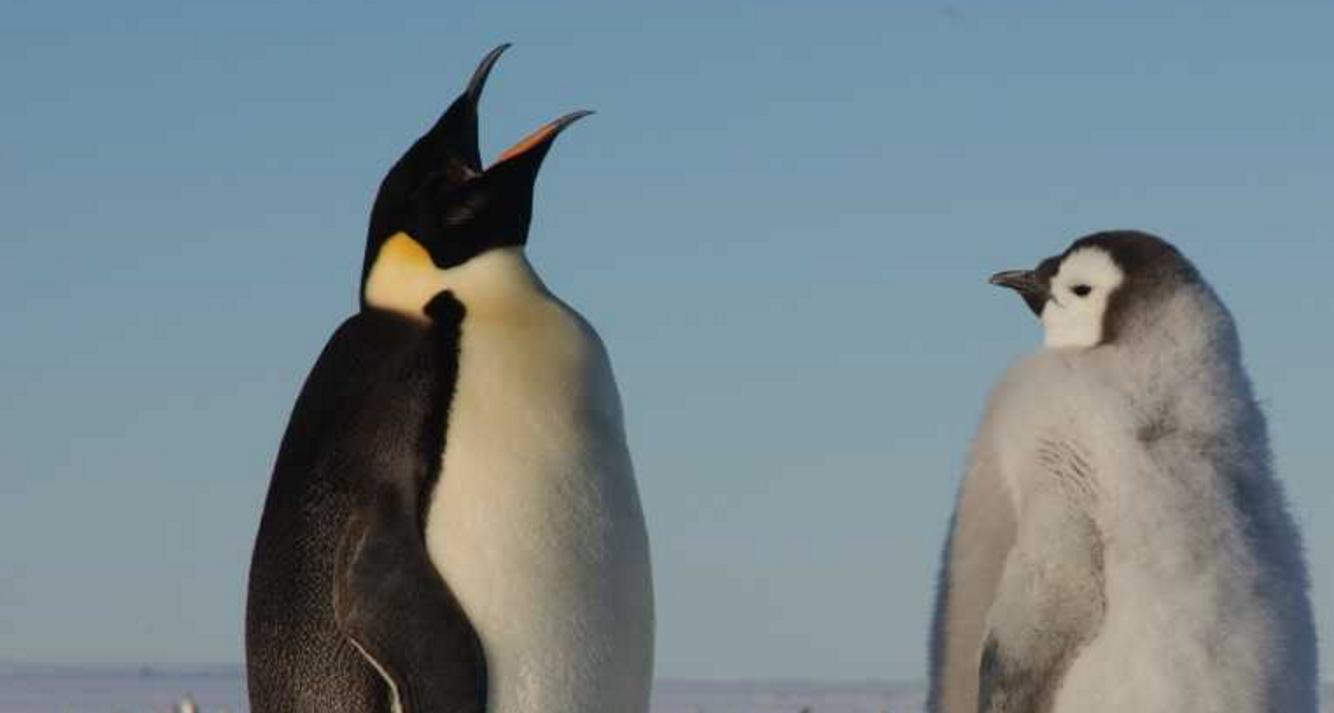 Google Talks Coming Penguin Update