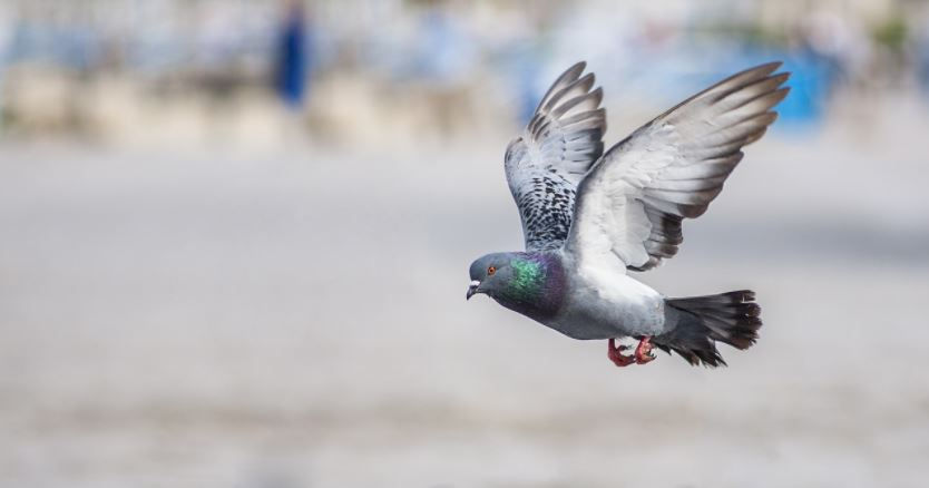 A Look at How the Google Pigeon Update Affected Local Search Results