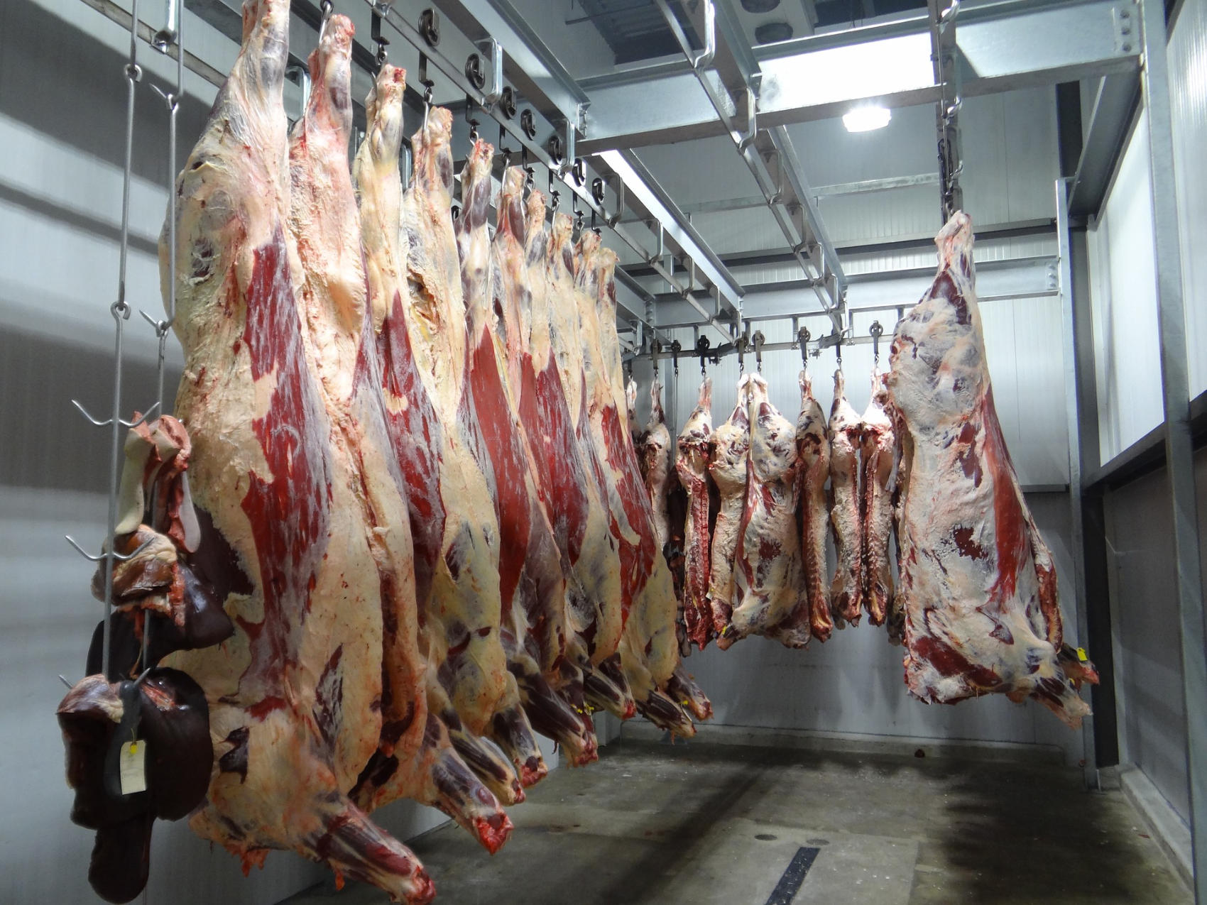 Beef Processing - Image by BlackRiv
